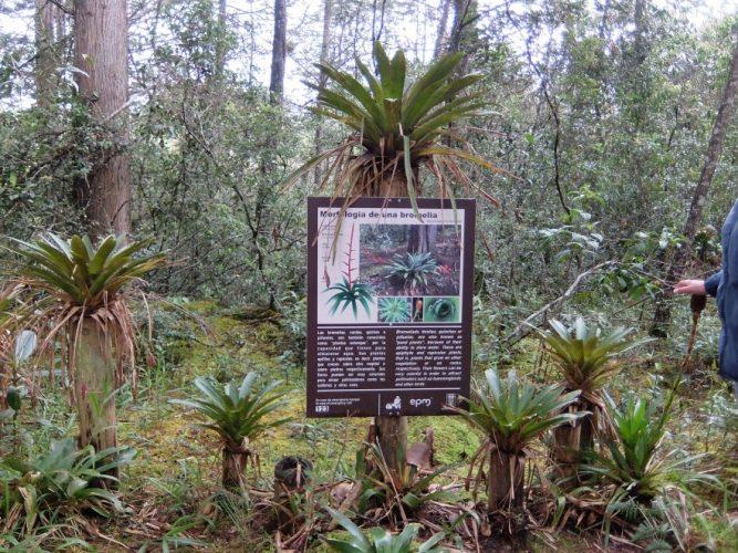 Bromelien mit Dokumentation im Parque Arví